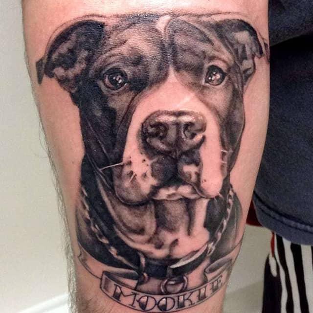 тату стафф собака
